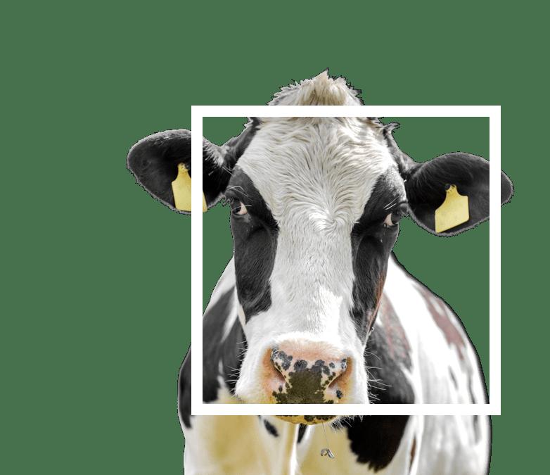 home-hero-milkflex-reduced